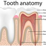what are teeth made up of